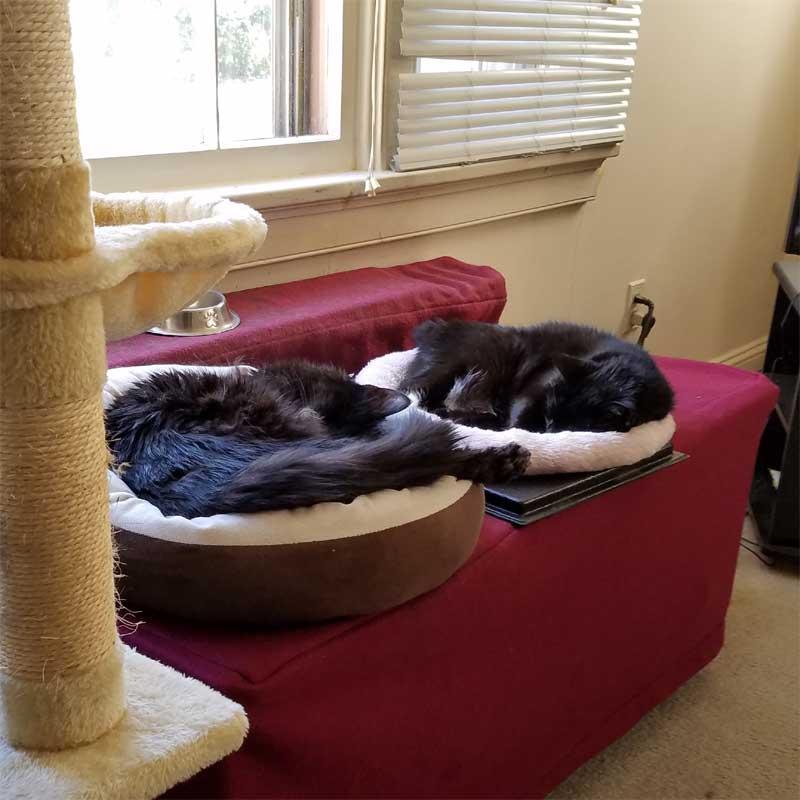 cats having a nap
